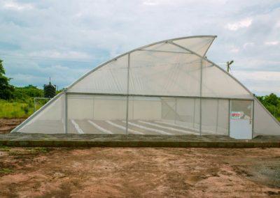 Greenhouse (11)