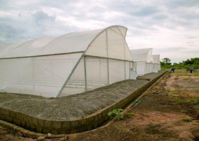 Greenhouse (6)